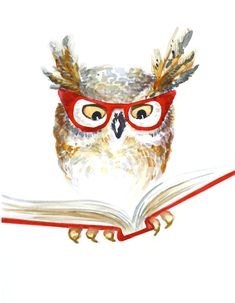 Librarian owl