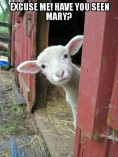Baby Lamb Farm Animals Cute Pictures At the beginning when he was fed lamb. Part 1 Funny Animal Memes, Funny Animal Pictures, Cute Pictures, Funny Animals, Funny Memes, Hilarious Pictures, Animal Quotes, Animal Pics, Funny Chicken Memes