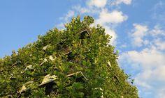 Baubotanik, or Living Plant Constructions, is the brainchild of architect Dr…
