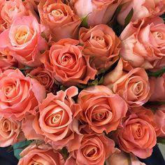 상큼하게 꽃모닝입니당  오늘두 먼데이마켓 예쁜꽃들로  가~~득 준비되어있습니당  .  .  .  #꽃모닝 #굿모닝 #일요일 #좋은아침 #꽃스타그램 #인스타플라워 #장미 #오렌지장미 #장미다발 #rose #홍대 #상수 #예쁜꽃집 #스타일플라워샵 #mondaymarket