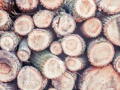 wood-938251