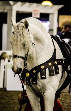 Medieval horse.