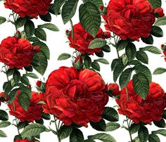 Redoute' Roses ~ Riot of Red   ~ by PeacoquetteDesigns on Spoonflower ~ bespoke fabric, wallpaper, wall decals & gift wrap ~ Join PD  ~ https://www.Peacoquette.com  #Spoonflower #Peacoquette