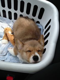 Corgi in a basket Cute Funny Animals, Cute Baby Animals, Animals And Pets, Sleepy Animals, Cute Corgi, Corgi Dog, Cute Dogs And Puppies, I Love Dogs, Lab Puppies