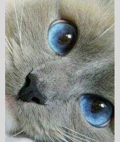 Zo  mooie blauwe ogen...
