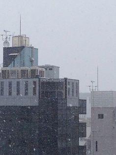 20140208 記録的な雪らしい。