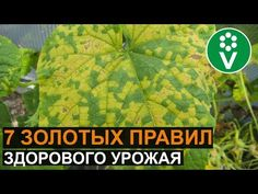 Farm Gardens, Plant Leaves, Plants, Youtube, Sodas, Plant, Youtubers, Youtube Movies, Planets