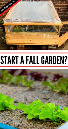 Start a Fall Garden.  You can get different vegetables like tomato, squash, and other warm-season plants in summer. At the end of summer, gardeners start to plan for fall planting. After the harvesting, the summer crops, there is space in the garden so you can sow the seeds for fall to make your garden productive again.