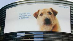 Ad of the Day: A Dog Trails Shoppers Around a Mall on Its Billboards, Hoping to Be Adopted | Adweek