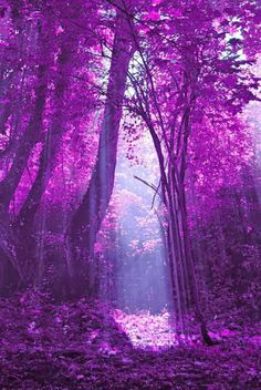 Pantone Color of 2014 - Radiant Orchid