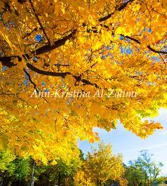 Ann-Kristina Al-Zalimi, sunny, sunshine, autumn, colors, color, leaf, autumn colors, colorful leaf, syksy, syysvärit, aurinkoinen syyspäivä