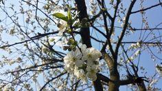 Sic Itur Ad Astra: Garden