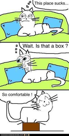 comfort is relative for kittehs  icanhascheezburger.com