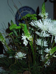 Christmas Flowers - Star of Bethlehem
