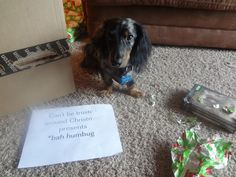 Dog Shaming features the most hilarious, most shameful, and never-before-seen doggie misdeeds. Join us by sharing in the shaming and laughing as Dog Shaming reminds us that unconditional love goes both ways. Dog Shaming Pictures, Dog Pictures, Animal Pictures, Dachshund Dog, Dachshunds, Weenie Dogs, Animal Quotes, Dog Toys, I Love Dogs