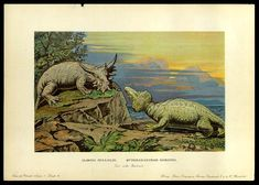 Elgina and Hyperodapedon - Early Prehistoric Animal and Dinosaur Pictures