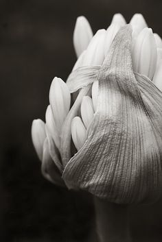 I'm not sure what this is, but it sure is incredible in black and white photo~