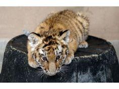 Cheyenne Mountain Zoo has been named a top 10 zoo by TripAdvisor