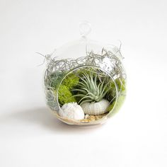 Beach Terrarium // DIY with Air Plant // Ombre by groundlings, $26.00