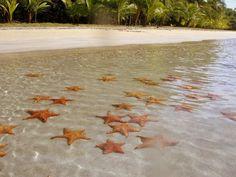 Playa de las Estrellas de Mar en Bocas del toro, Panama.  Starfish Beach in Bocas del Toro, Panama.