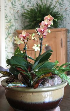 Orchid Flower Arrangements, Christmas Flower Arrangements, Orchid Centerpieces, Beautiful Flower Arrangements, Orchids Garden, Orchid Plants, Flowers Perennials, Planting Flowers, Exotic Flowers