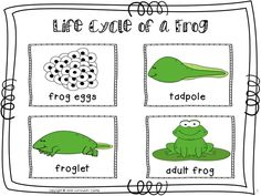 FREEBIE...Life cycle of a frog sequencing cards in color and black & white!