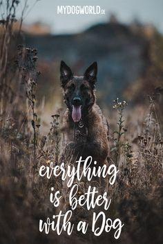 Die 1424 Besten Bilder Von Hunde In 2019 Hunde Tiere Und