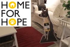 Home for Hope is a collective project with IKEA and other stores that aims to provide much needed exposure for homeless pets in Singapore. Dog Charities, Ikea Home