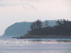 Bogildo Island: Korea's Best Secret.