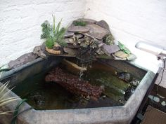 1000 Ideas About Indoor Pond On Pinterest Indoor Indoor Water Features And Courtyards