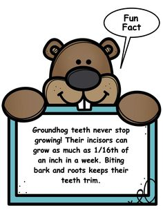 Booklet, craft & Fun Fact Posters are all part of this packet. Groundhog Day Activities, Booklet, Fun Facts, Posters, Crafts, Creative Crafts, Postres, Handmade Crafts, Funny Facts
