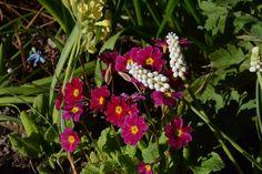 Kuvia puutarhastamme - uusimmat Nikon D7100 #puutarha