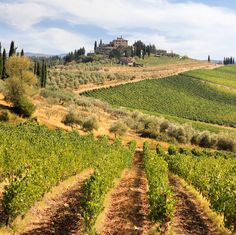Radda in Chianti vineyards and olive gardens in Tuscany by B℮n, via Flickr