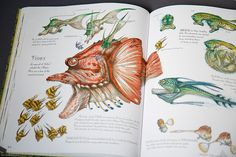 The Wildlife of Star Wars - 09 Terryl Whitlatch, Star Wars Planets, Original Trilogy, Love Stars, Field Guide, Creature Design, Book Review, Mythology, Character Design
