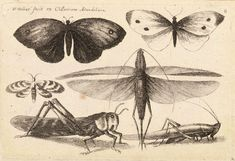 Wenceslas_Hollar_-_Six_insects_(State_3).jpg (2895×1982)