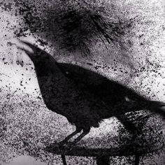 Raven on Table | From a unique collection of black and white photography at https://www.1stdibs.com/art/photography/black-white-photography/