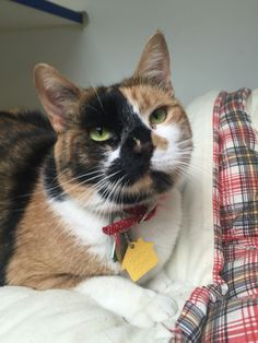 Olga has been waiting such a long time for hr forever home. Her only request is to be the only pet. In every other way, she's purrrfection!