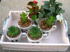 Para inspirar: canecas são transformadas em vasos | Jardim das Ideias STIHL - Dicas de jardinagem e paisagismo