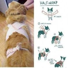 Tellington Ttouch, el método a base de telas para que el perro no sufra la pirotecnia - Ecoportal.net