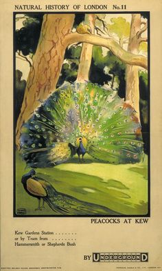 kew gardens posters - Google Search