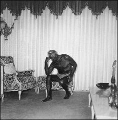 Diane Arbus, Charles Atlas seated in his Palm Beach home, Fla., 1969