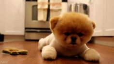 okay, this is possibly the cutest puppy I've ever seen.
