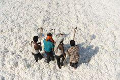 Trabajando el algodón en la India