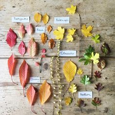 """222 Likes, 6 Comments - Emma Mitchell (@silverpebble2) on Instagram: """"• Unmasked • All these colours are present all year round (I know-a strange thought, no?). The…"""""""