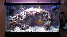 Salty Reefer - 65 Gallon Reef Aquarium 04.18.2011