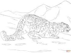 Leopardo De Las Nieves Cazando