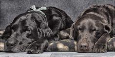 Dream Team Bosley and Birkoff fall asleep... Credit: Ramon Nayar (Click to Support Artist)