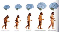 EVOLUCIÓN DE LA ESPECIE HUMANA.