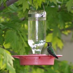 Feeder by Best 1 and is the very best feeder.