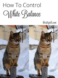 How To Set Your White Balance via @sitsgirls